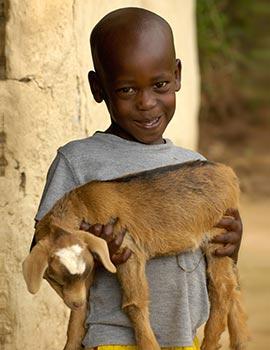 livestock-for-a-family_270x350